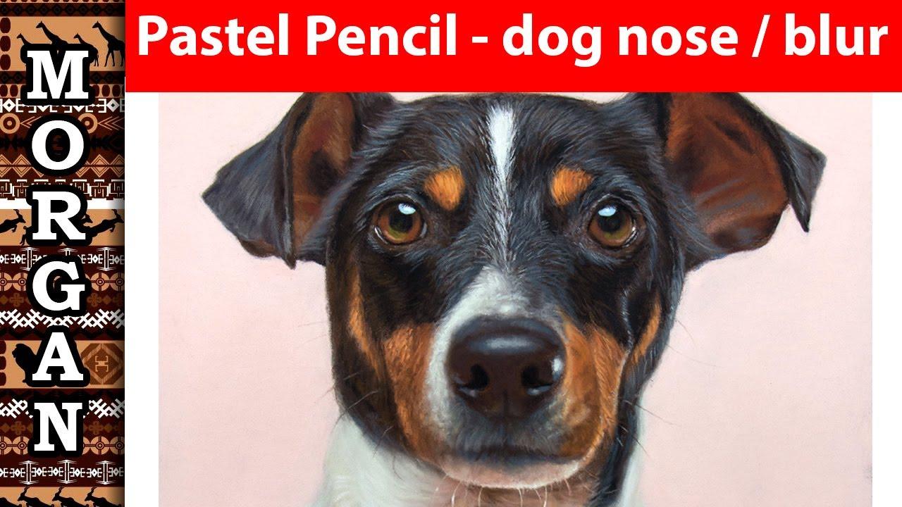 Become a pet portrait artist