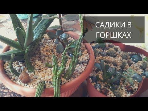 Композиции из Суккулентов -садики в горшках