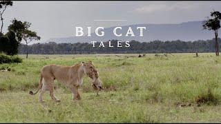 Lion Documentary  Big Cat Tales | Wild Planet HD 1080p