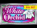 Black Orchid Slot Machine BIG WIN Bonus