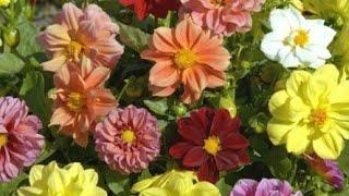 Сажаем семена цветов// Теплица // Домашние хлопоты