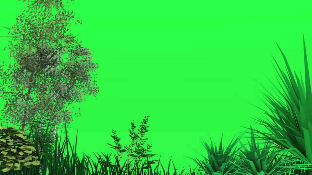 Green Screen Trees Blowing In The Wind Youtube