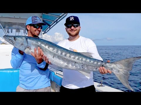 Giant Barracudas Crushing Topwater Baits With Seal Skin Covers