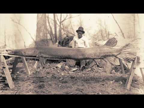Alligator Gar Released In Kentucky
