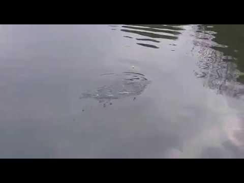 דייג קיבוץ דפנה