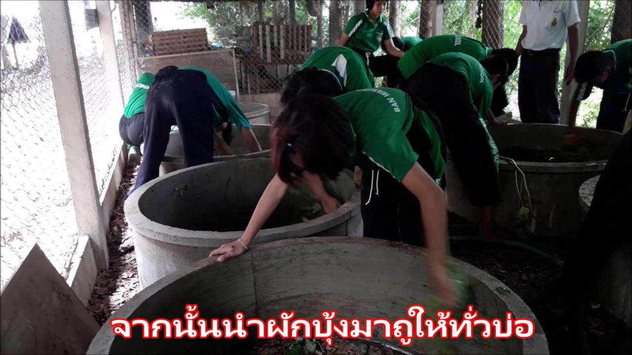 การเลี้ยงปลาดุกในบ่อซีเมนต์ - โรงเรียนบ้านวังโค้ง