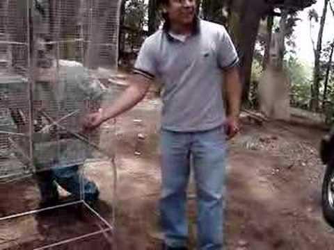 Wildlife Release/Liberacion animales, Cerro Alux, Guatemala