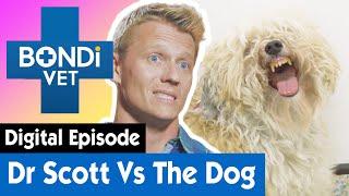 Dangerous Dog Won't Let Dr Scott Near Them! | E15 | Bondi Vet