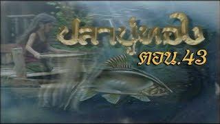 ปลาบู่ทอง ตอน 43