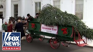 Trump, First Lady receive the White House Christmas Tree