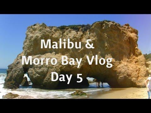 TRAVEL WITH ME | Morro Bay Sea Life Vlog