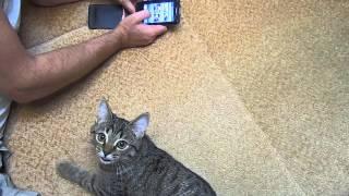 Реакция Маси на кошачьи звуки