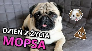 Dzień z życia mojego psa *ŻYCIE GACUSIA*