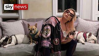 Lady Gaga offers $500,000 reward after dog-walker shot and pets stolen