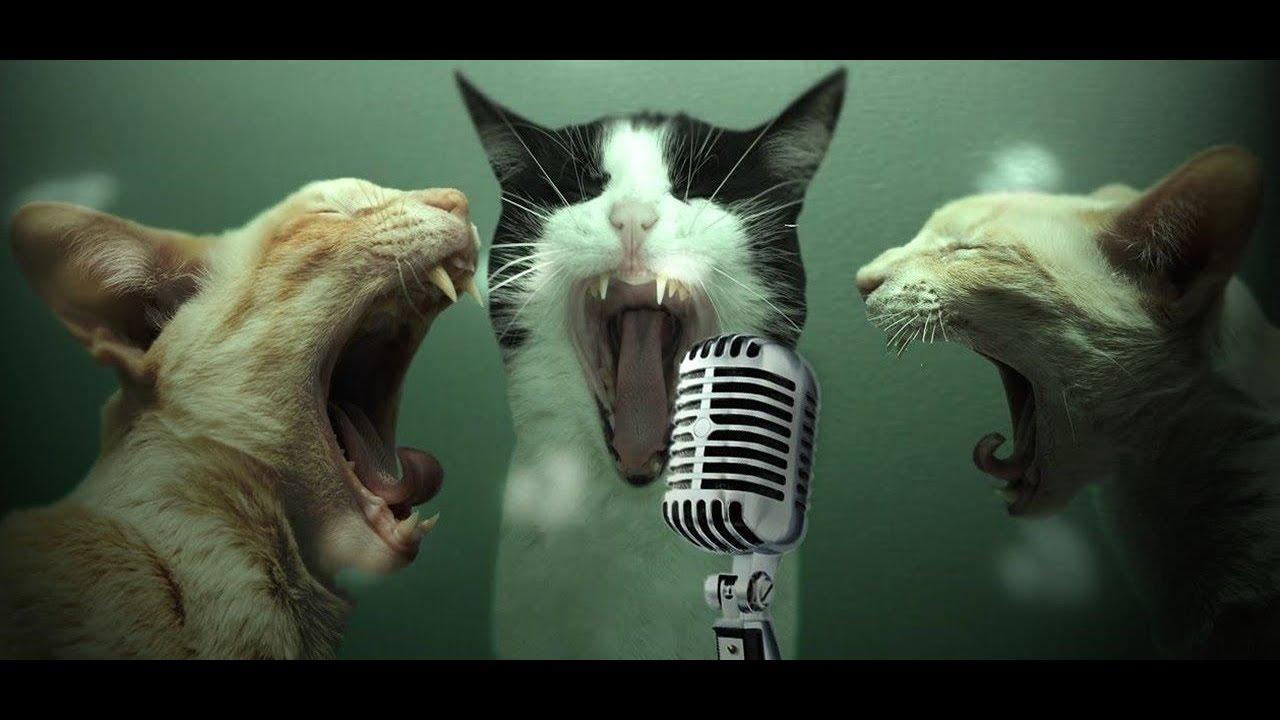 начинают картинки поющие коты лет