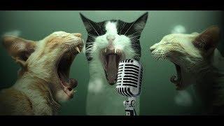 КОТЯТА ПРИКОЛЬНО ПОЮТ|Я РЖАЛ ПОЛЧАСА!!!|Приколы про котов|FUNNY CATS|Смешные кошки|Anna Kazakova