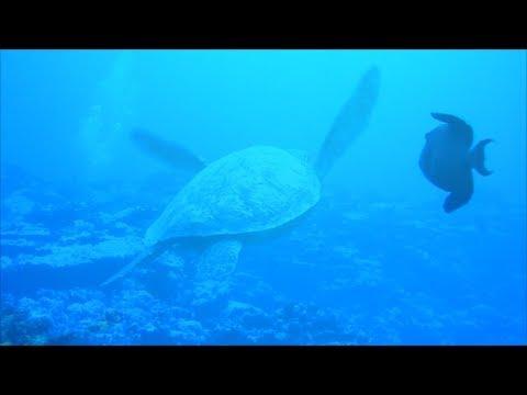 Honeymoon in Rarotonga, The Cook Islands