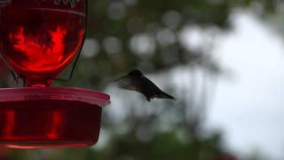 Diy Hummingbird Feeder! Hummies Love It!