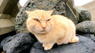 魚を狙っているの?海の岩場で何かを探し回る猫達