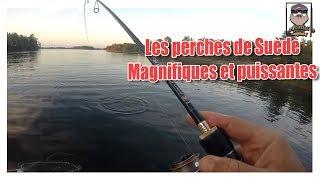 Sweden Fishing trip day 4 : Les BROCHETS ne mordent pas, du coup on cherche les PERCHES de suède
