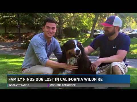 Family finds lost dog in California wildfire