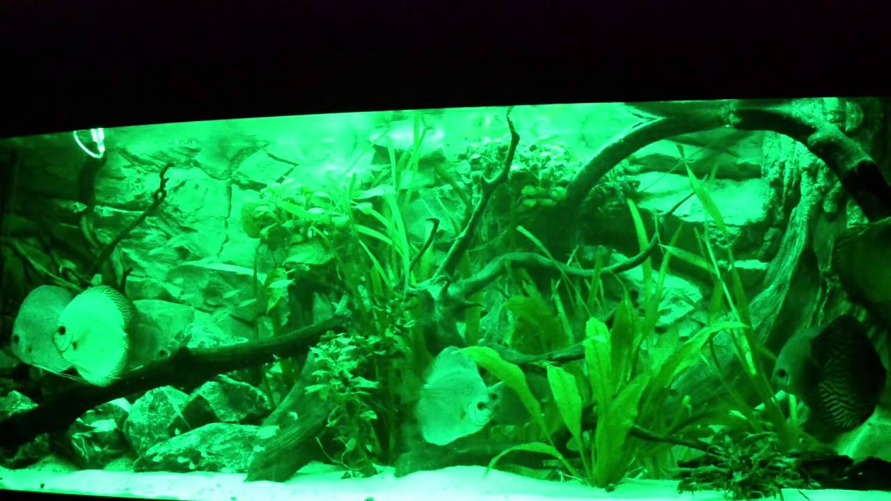 aquarium auf smd led umr sten youtube. Black Bedroom Furniture Sets. Home Design Ideas