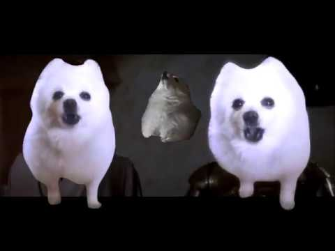 Download Youtube: Gabe the dog Star Wars Cantina theme