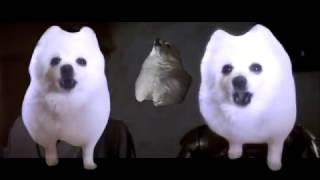 connectYoutube - Gabe the dog Star Wars Cantina theme