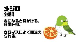 バーチャルねこと どうぶつまなぼう #02
