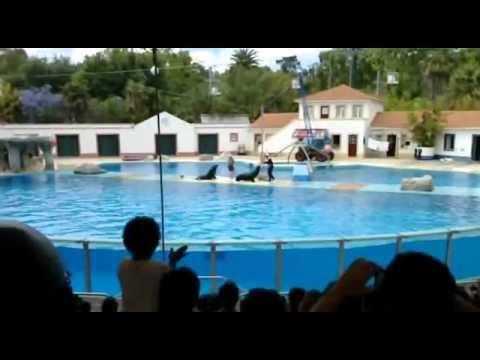 caio santiago zoo 2sono