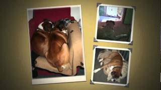 In Memory of Rocky the Boxer Dog......a great friend & sadly missed!
