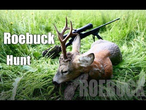 7mm Rem Mag vs buck/  Roebuck hunting 2017/ Bockjagd 2017