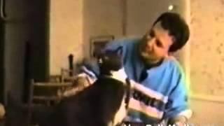 Говорящие коты - Talking cats