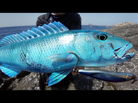 Rare Fish To Catch From Land!