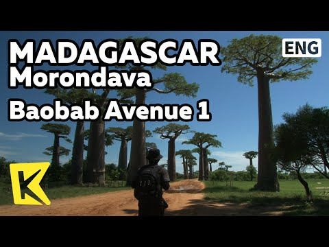 【K】Madagascar Travel-Morondava[마다가스카르 여행-모론다바]바오밥 나무 거리 1/Baobab Avenue 1/Tree/Little Prince/Fruit