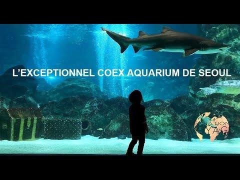 L'exceptionnel COEX aquarium de Séoul, Corée du Sud - Sensations Voyage #9