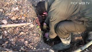 Reprise de lapins au bois de Boulogne