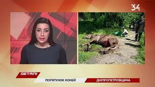 Полцарства за коня: в Днепропетровской области чрезвычайники за день спасли двух лошадей