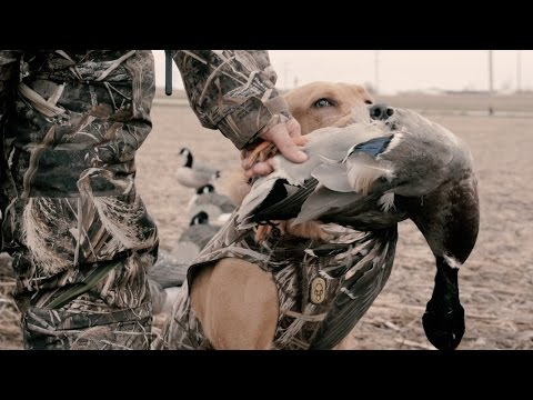 The X: Weather Dictates Duck Hunting Success