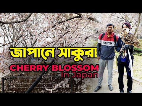 Cherry Blossom in Japan । জাপানে সাকুরা । Part-01