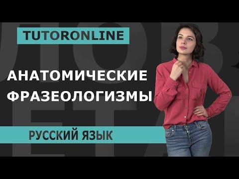 Русский язык   Анатомические фразеологизмы