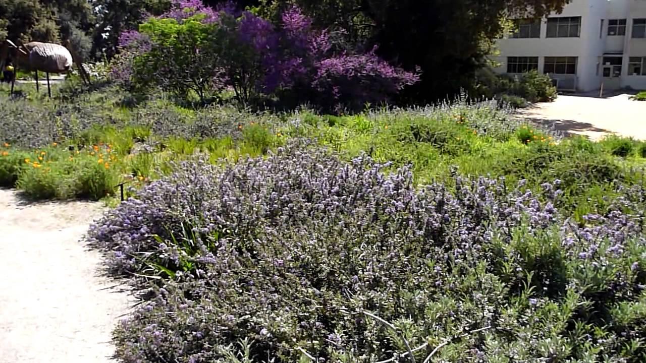 Rancho Santa Ana Botanical Gardens, Big Bugs