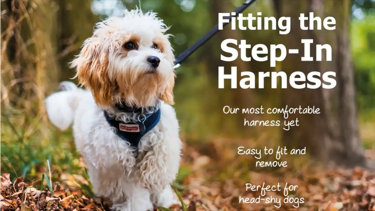 How To Fit A Step In Harness Youtube