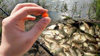 Эта насадка по холодной воде ловит всю рыбу За час ловлю 7 вёдер крупного карася