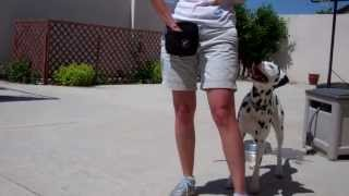 Devon's Dog Trick Training - Peek-a-boo