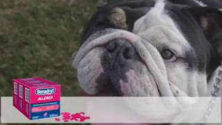 Giving Benadryl to Your Dog — The Complete Guide