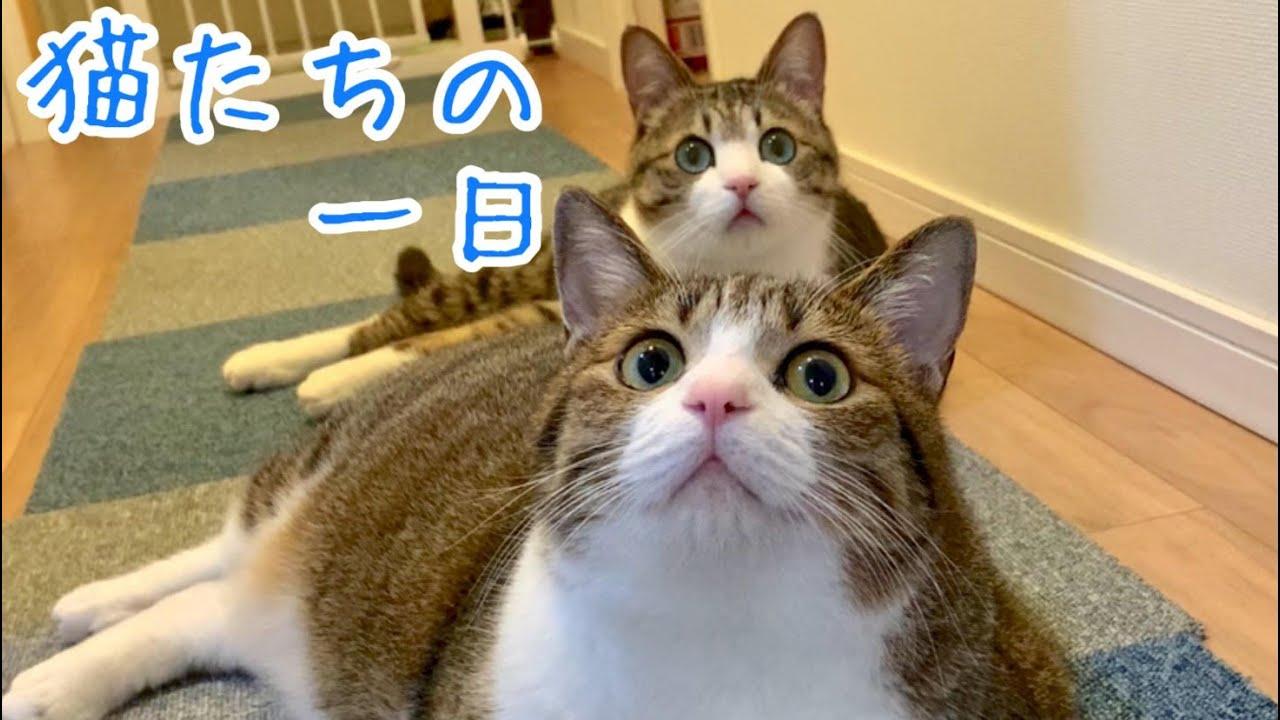猫たちのある日の一日の様子です。【Vlog】vol.280