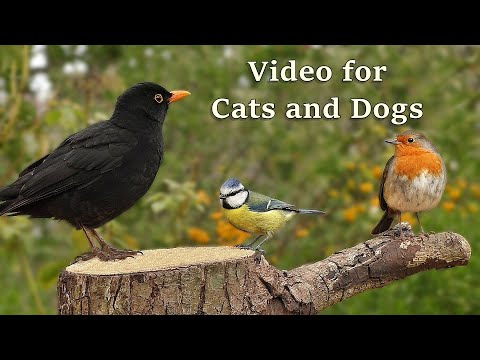Videos For Cats - 8 HOUR Bird Spectacular