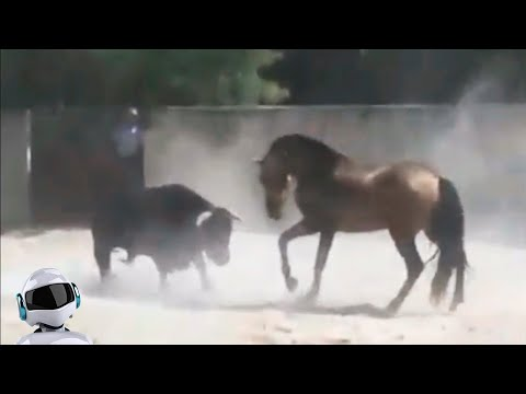 Лошадь в Деле / Лошадь против Собаки, Крокодила, Верблюда, Быка