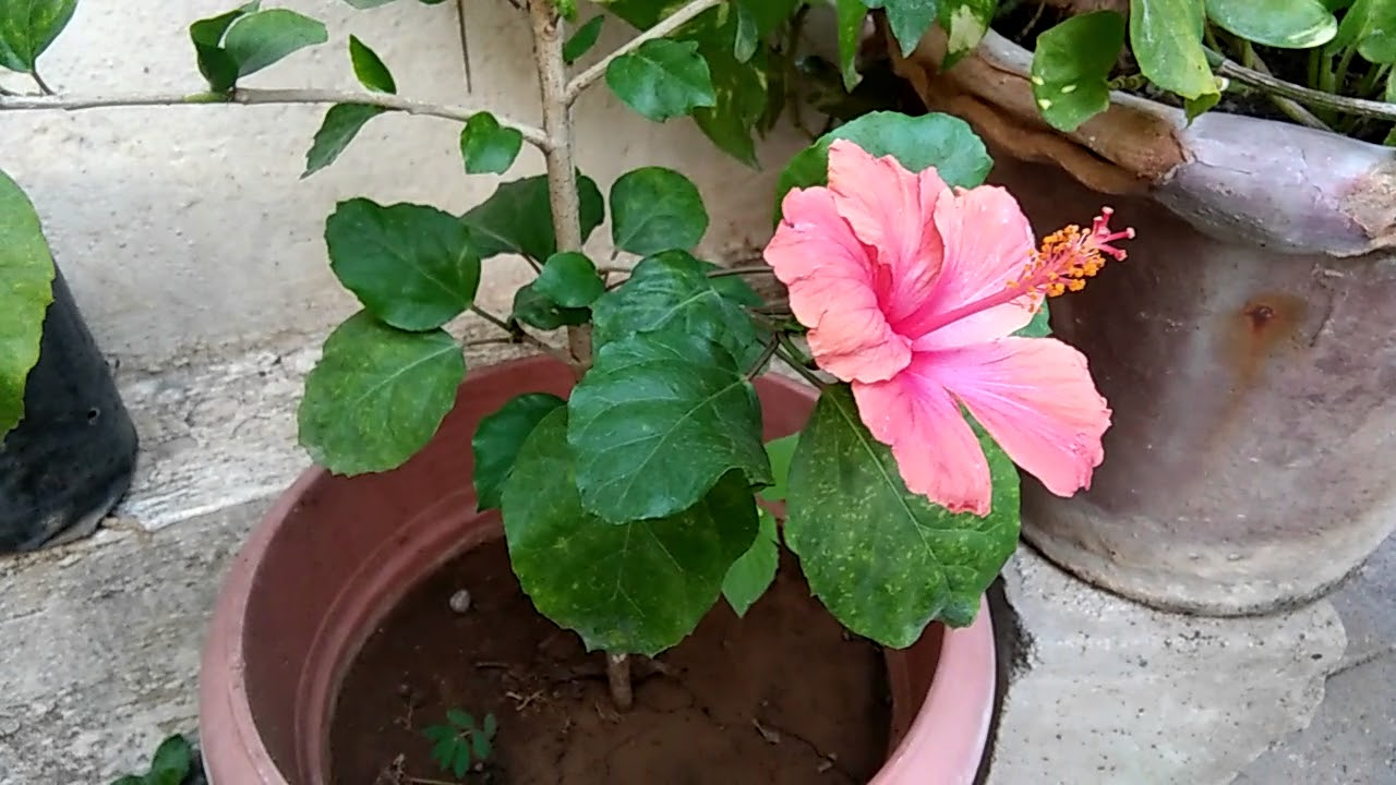 Definition And Structure Of Flower In Hindi Youtube